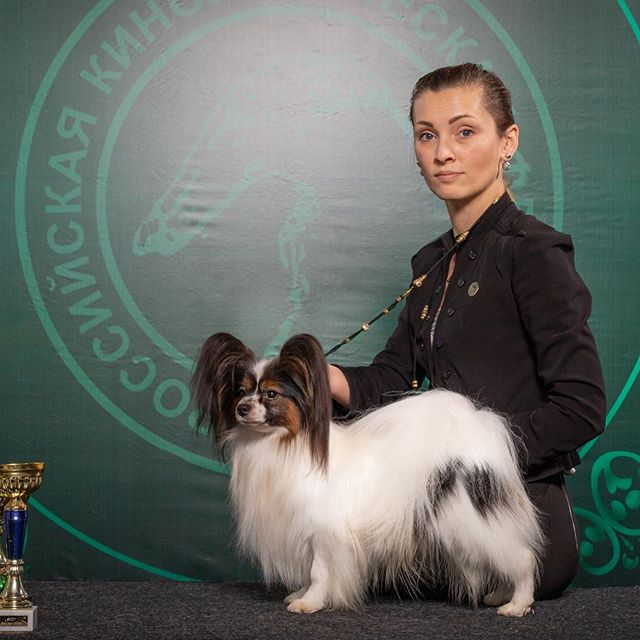 Now OfficiallyOur sweet Guest Nillaz Butterflyz Zummer in Russia  2 years old has finished his Russian Champion Title won in Style with 7 Shows -  7xCAC -  6xBOB  3x BIG 1 and 2 x BIG 3 Congratulation to Owner and Breeder Pernilla  Jan and