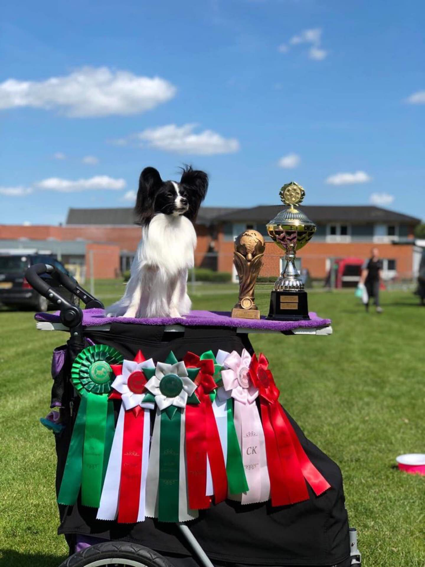 Bohusklippans Saphira Brilliant Svenska junior vinnare 2019Dansk junior champion Dansk Klubb junior champion Crufts Kvalificerad 2020Junior Winner Sopot Polen 2019What a girl mummies love Breeder Ann-Cathrin Lundqvist jpg