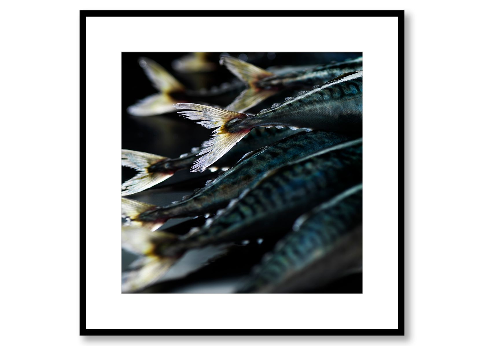 Mackerel. Food Art. Prints for sale. Photo by Fredrik Rege