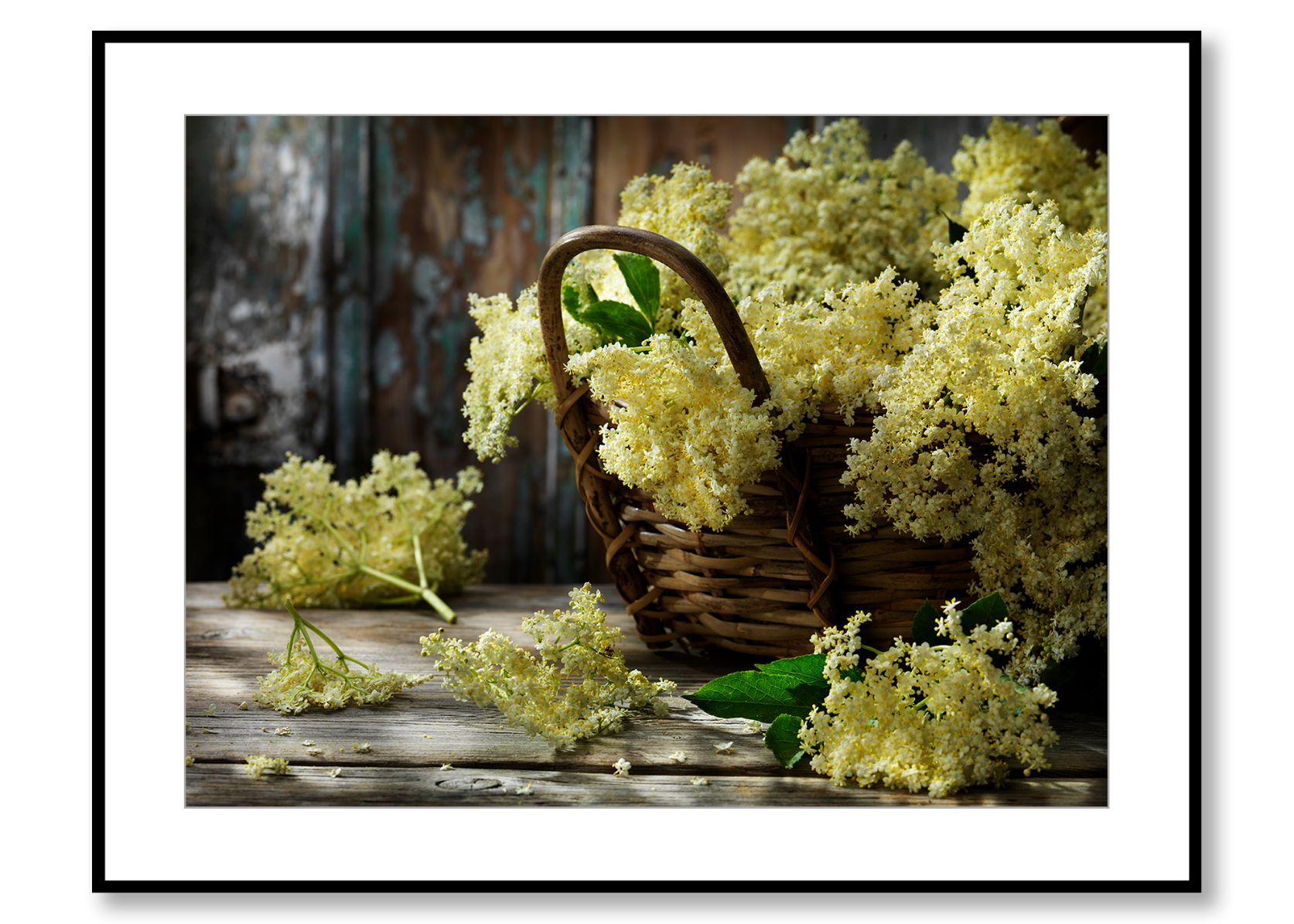 Elderflowers. Food Art. Prints for sale. Photo by Fredrik Rege