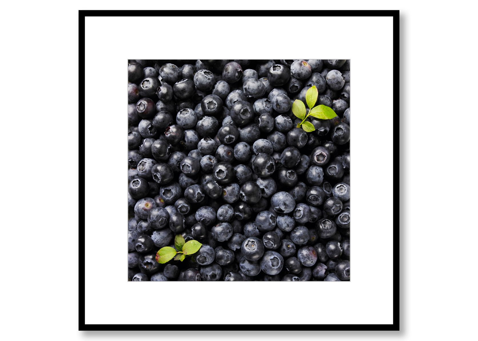 Blueberries. Food Art. Prints for sale. Photo by Fredrik Rege
