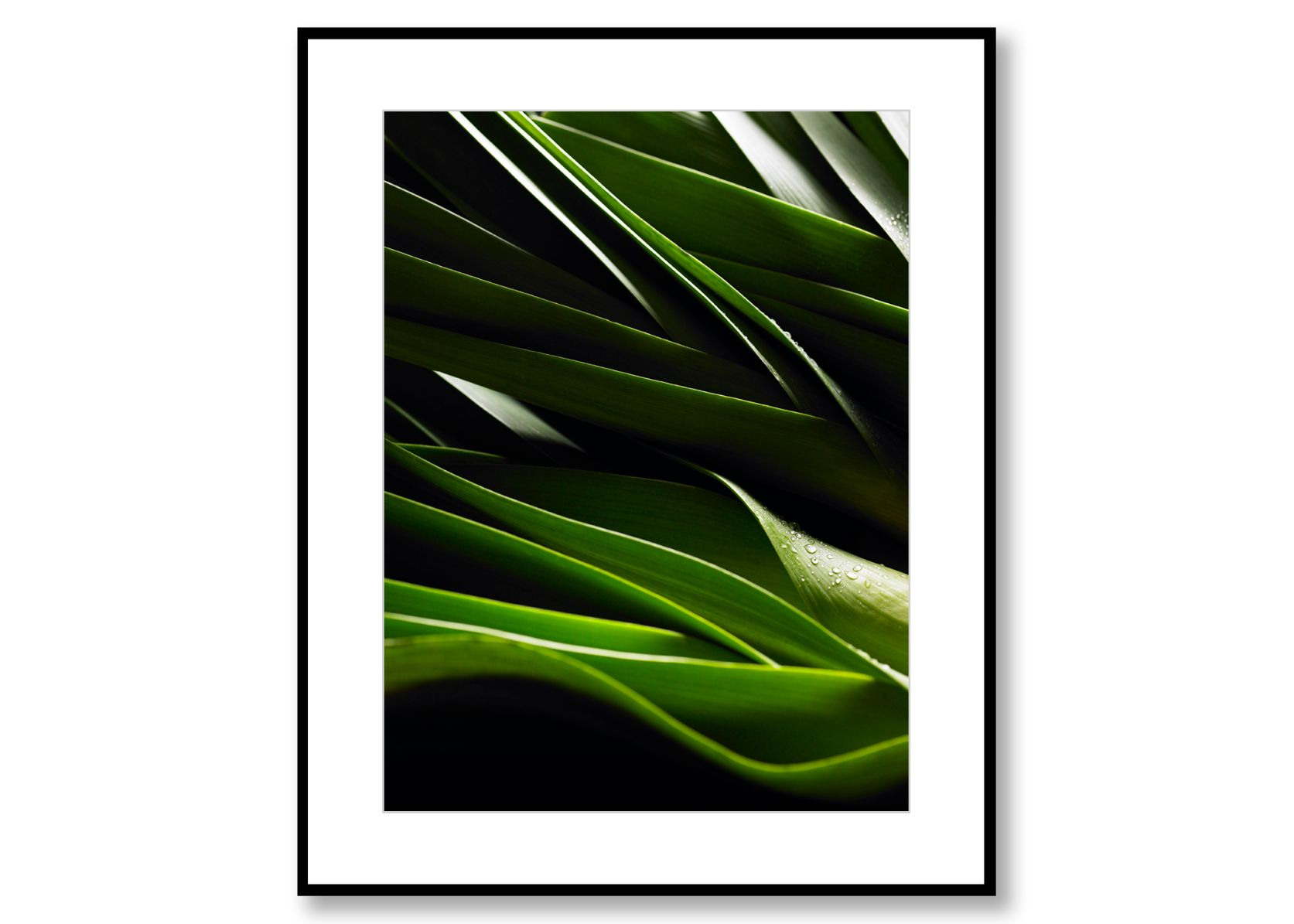 Leek. Food Art. Prints for sale. Photo by Fredrik Rege