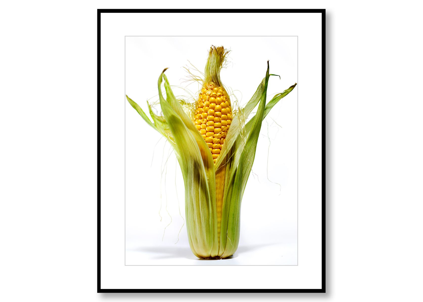 Corn. Food Art. Prints for sale. Photo by Fredrik Rege
