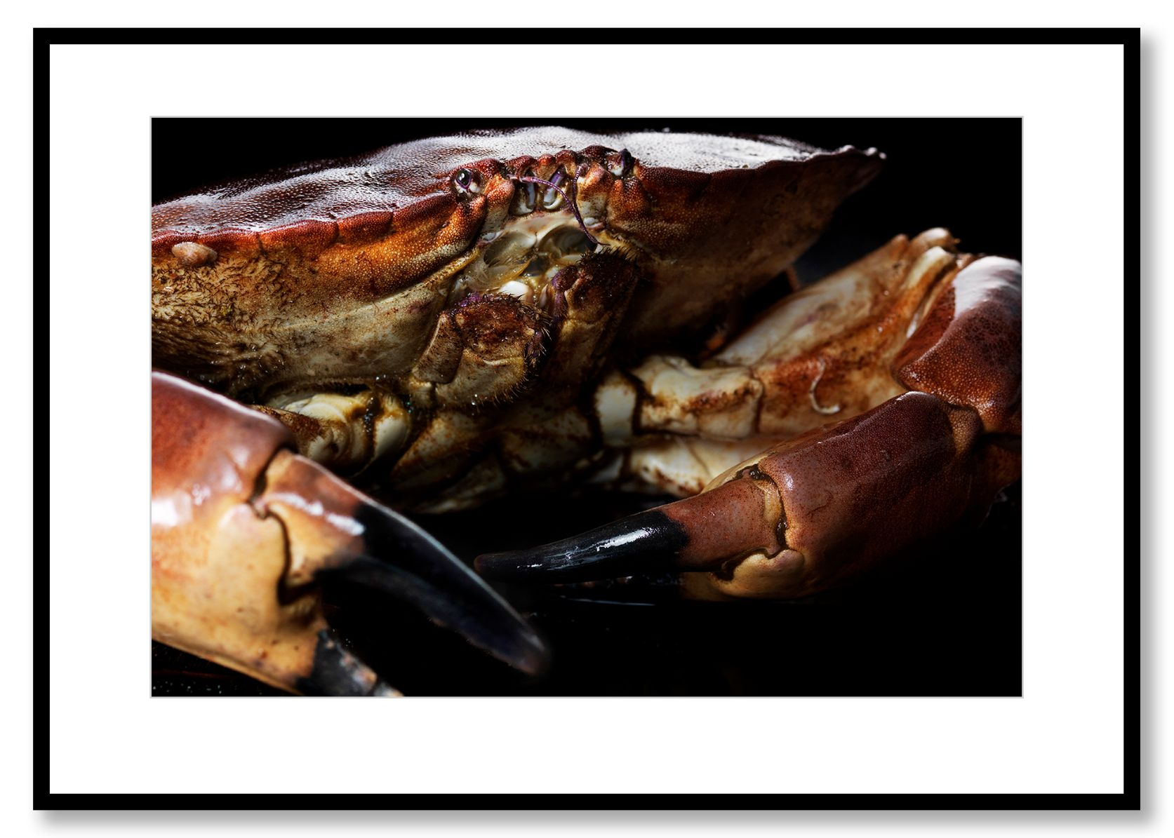 Crab. Food Art. Prints for sale. Photo by Fredrik Rege